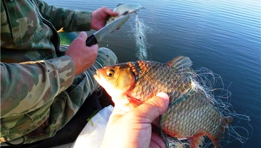 правила рыболовного хозяйства рф
