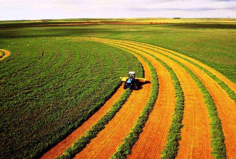 Херсонщина у лідерах з виробництва сільськогосподарської продукції
