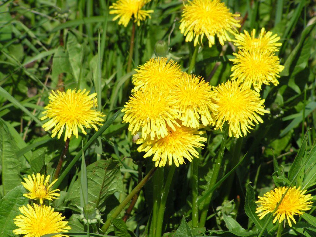 Весняні квіти зацвіли у Херсоні та Вінниці