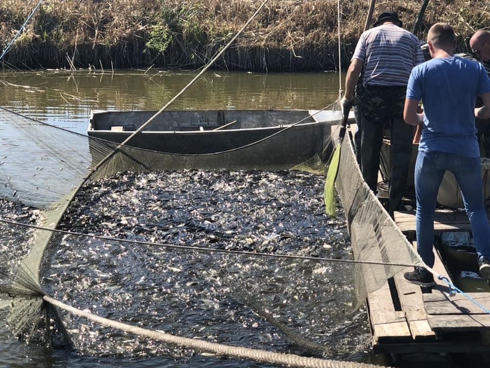 З Херсонського заводу частикових риб в Дніпро випустили