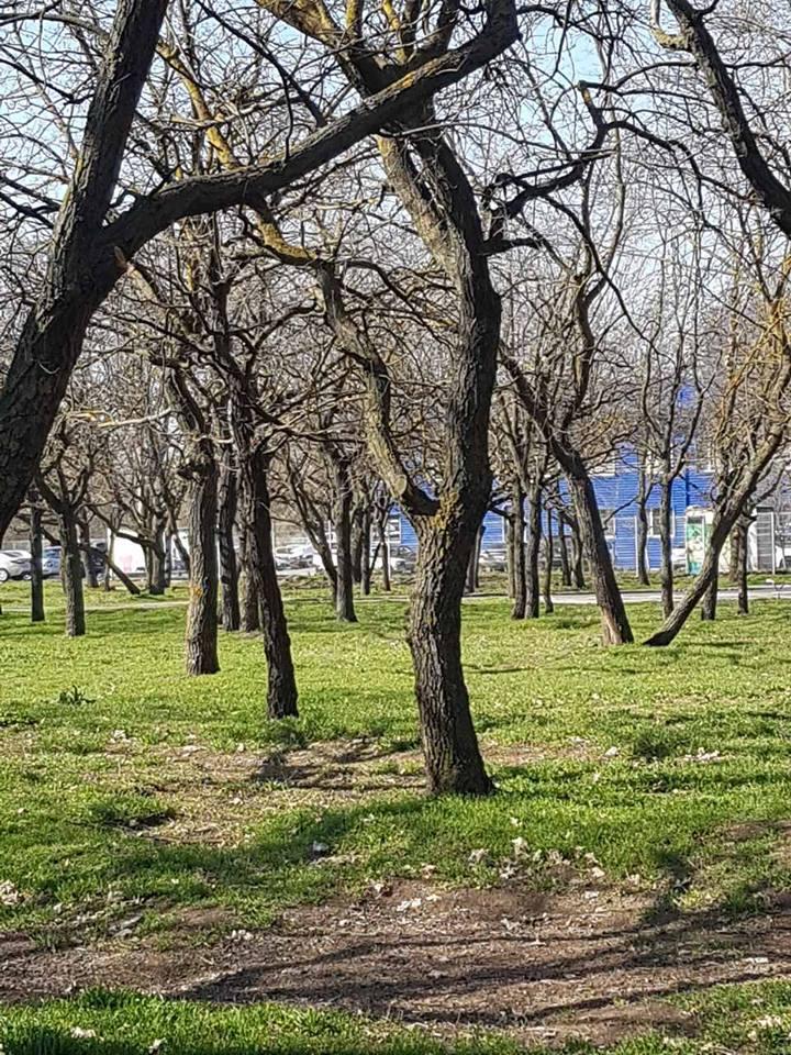 Неужели херсонцам вновь придется доходчиво объяснять властям, что парк - не место для строительства?