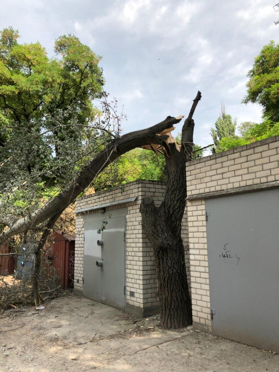 Огромное дерево упало на одной из херсонских улиц на проезжую часть