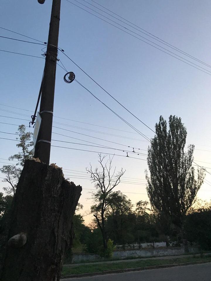 В Херсоне снова свалилось дерево (ФОТО)