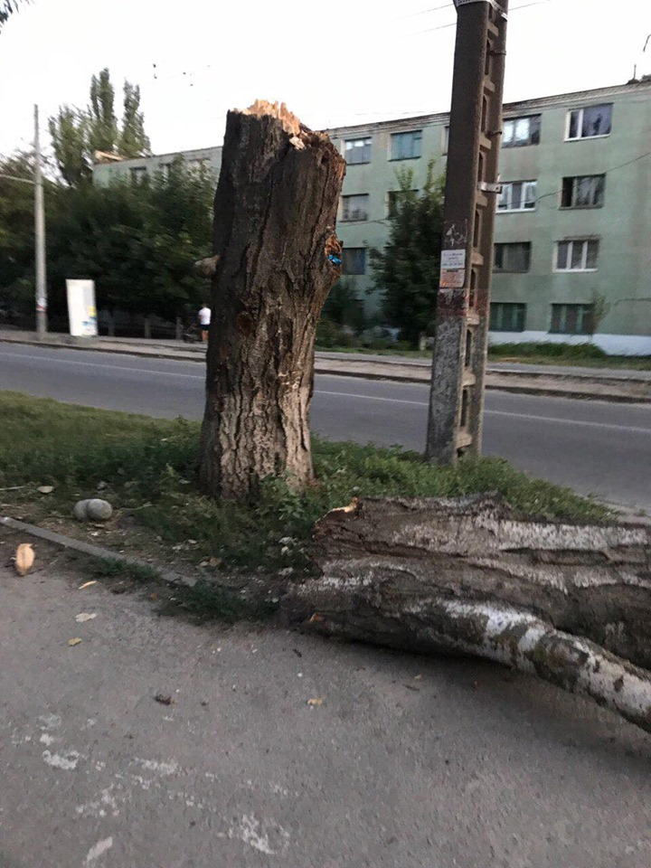 Дерево на Жилпоселке в Херсоне развалилось на тротуаре