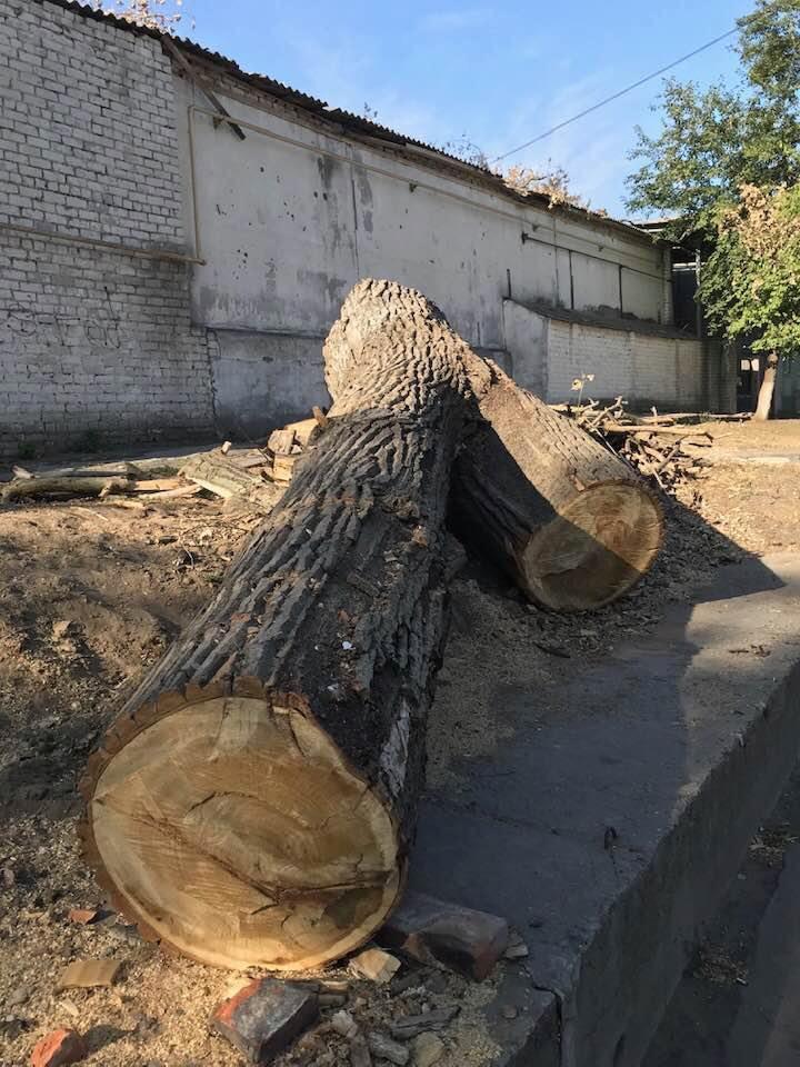 В Херсоне продолжают спиливать старые крепкие деревья