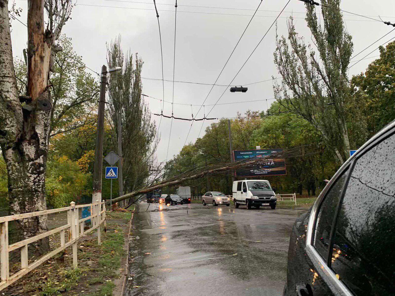 В Херсоне на проезжую часть упало дерево - ФОТО