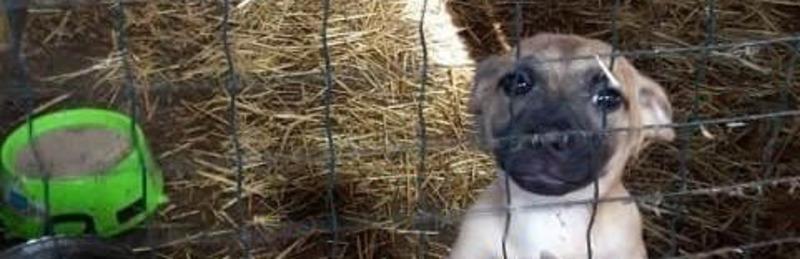 Чуть не сгорели заживо: в Херсоне подожгли приют для бездомных животных «4 лапы»
