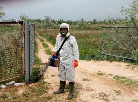 Жители и гости Арабатской Стрелки жалуются на нашеcтвие комаров
